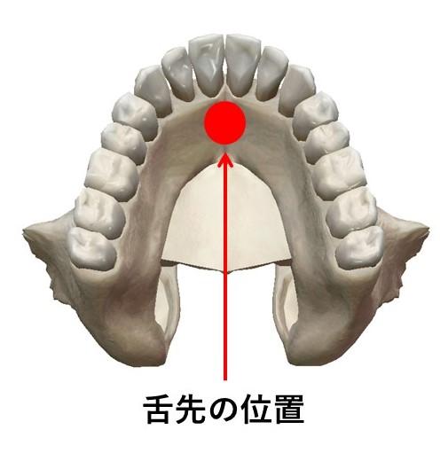 舌先の正しい位置のイラスト